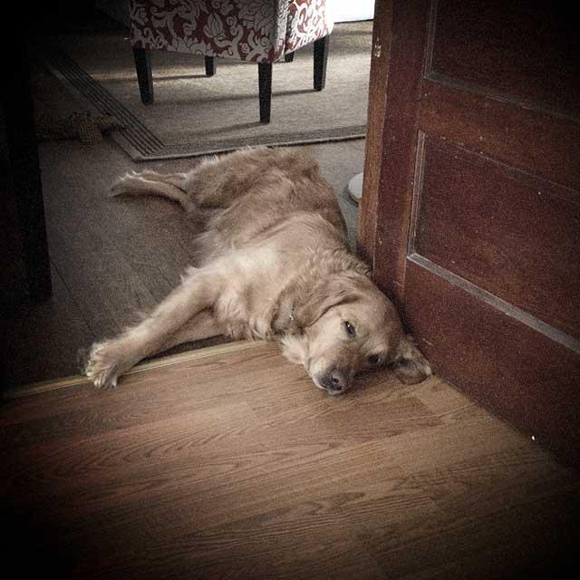 sleeping-pup-life-appalachia