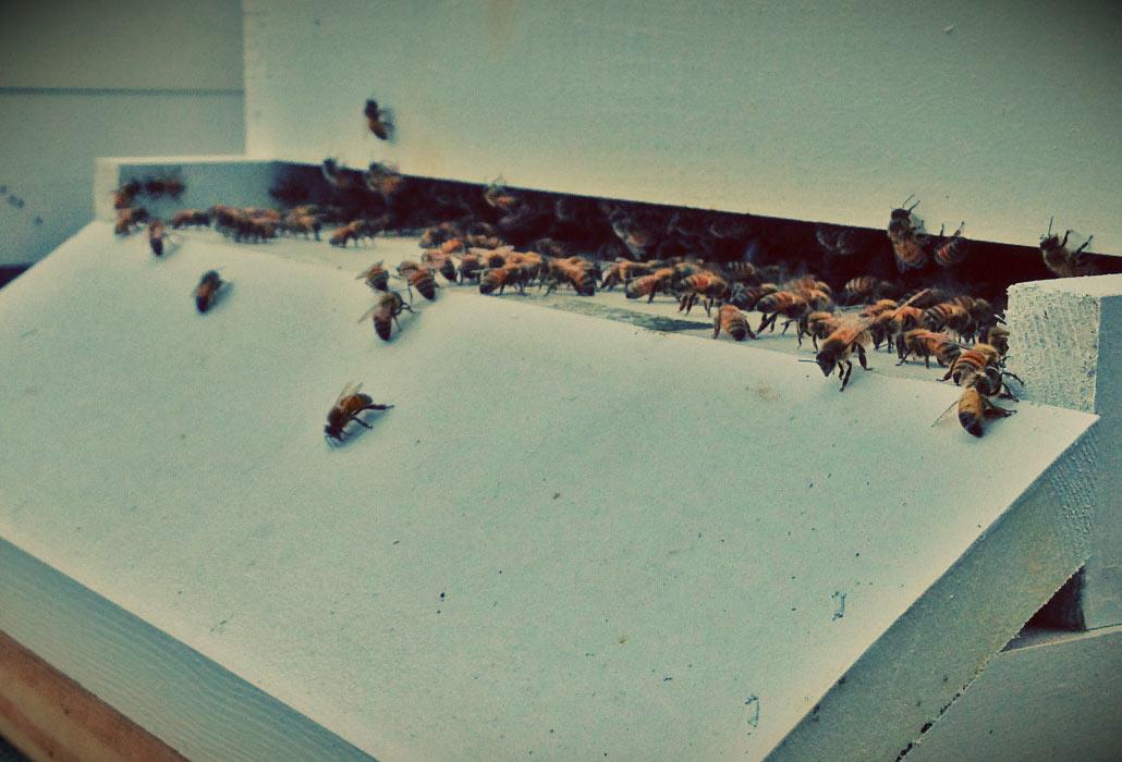 stout-farm-bees-1