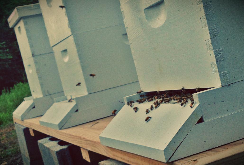 stout-farm-bees-2