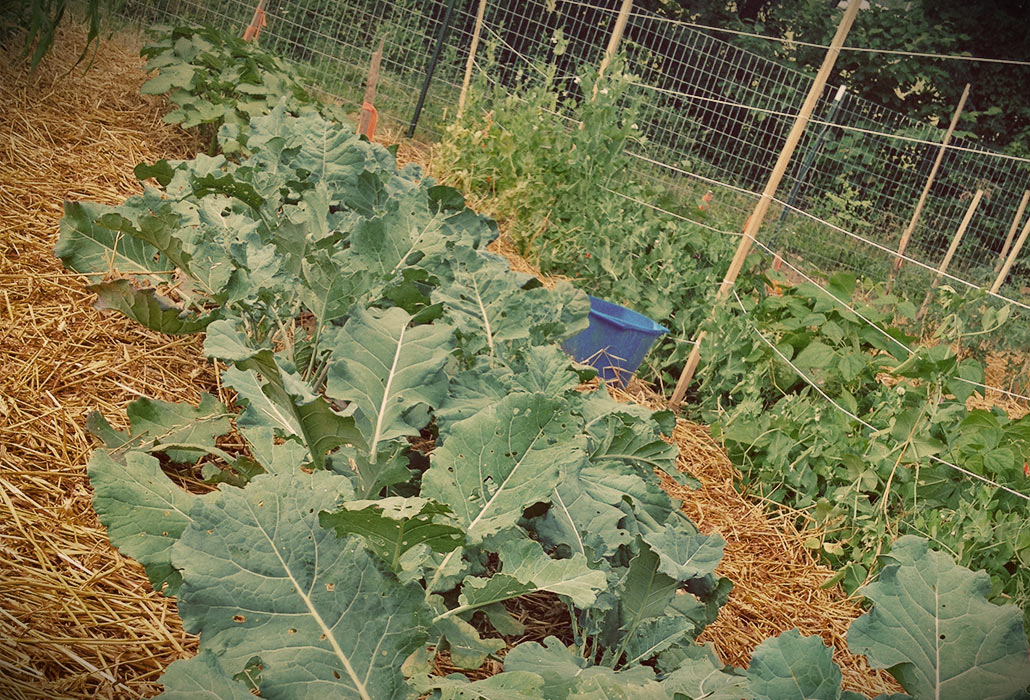 stout-farm-brocolli-garden